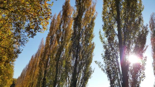 Parc de Sceaux aux couleurs de l'automne